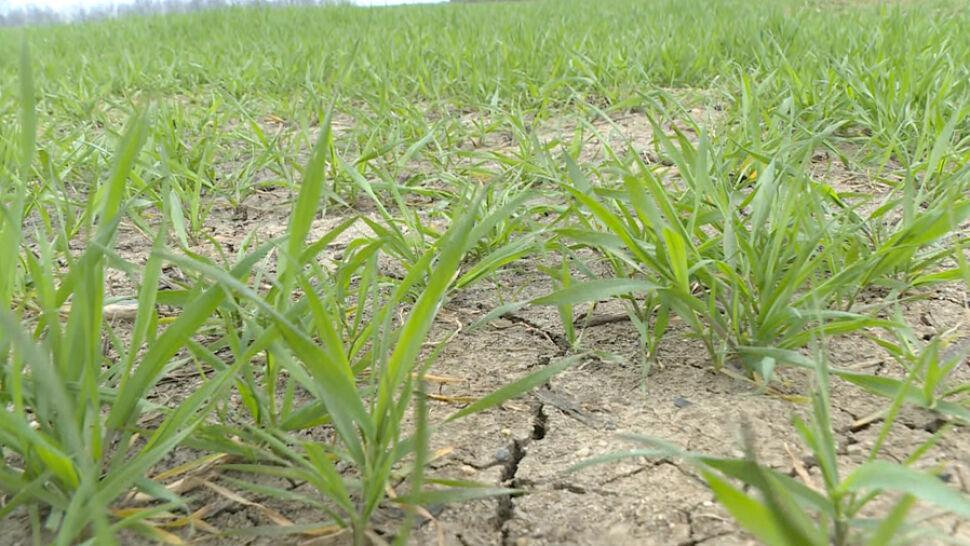"""""""Bez podlewania nic się nie uchowa"""". Rolnicy i leśnicy obawiają się suszy"""