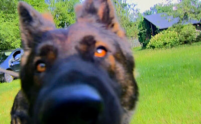 Dzień psa. Niezwykła historia o tym, jak Caley 4 miesiące wracał do domu