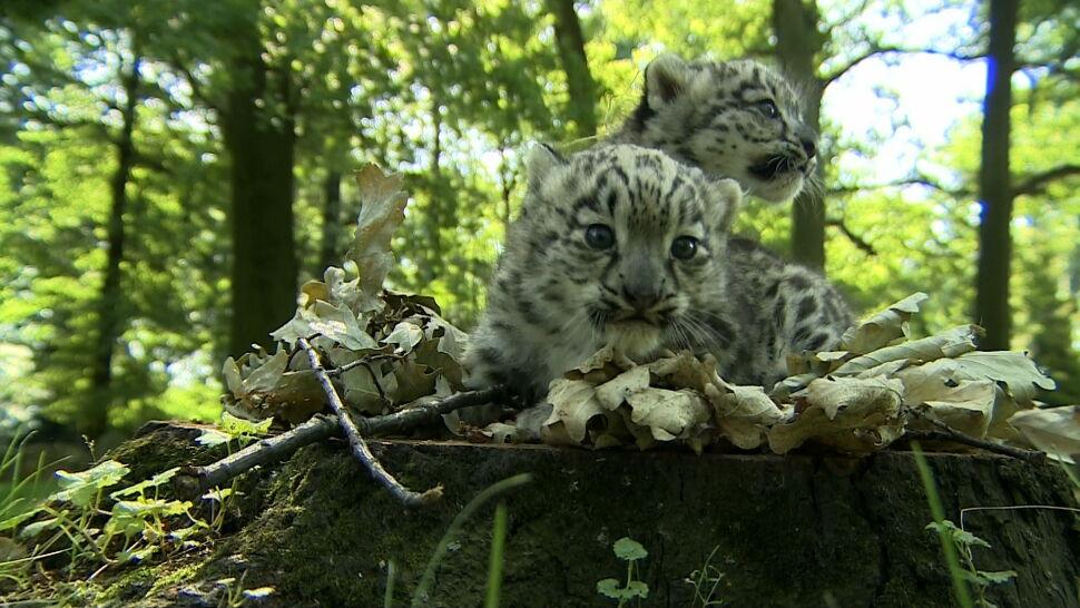 Wrocławski ogród zoologiczny poszukuje opiekunów dla zwierząt