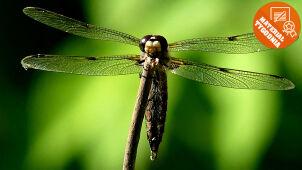 Wizyta w owadzim świecie Was zachwyciła