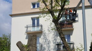 Mieszkańcy: wycinają zdrowe drzewa. Urzędnicy: były chore