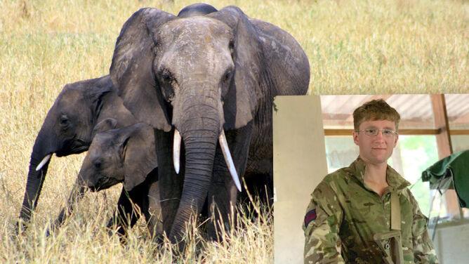 Brytyjski żołnierz zginął w akcji przeciwko kłusownikom. Media: stratował go słoń
