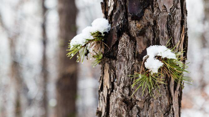 Chłód, opady i 10 centymetrów śniegu w górach